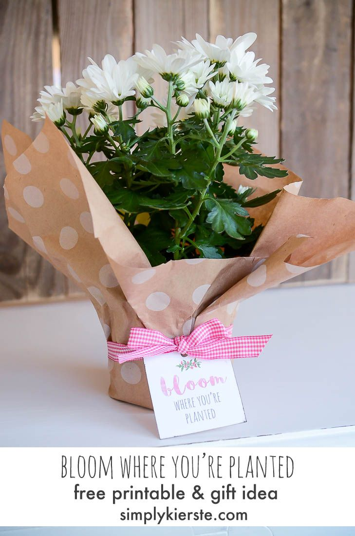 Diy gifts ideas super cute bloom where youre planted diy gifts solutioingenieria Image collections