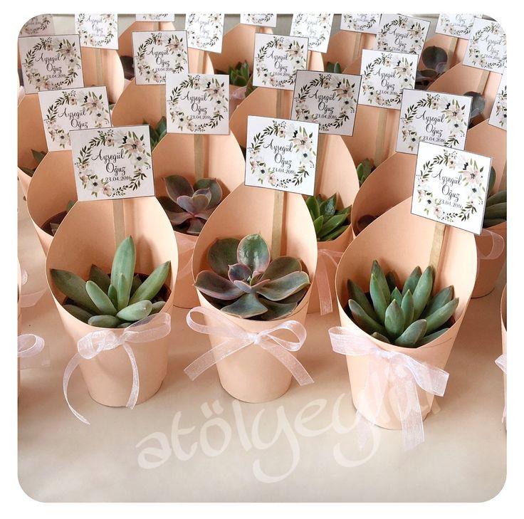Valentines Day Gifts Mini Sukulent Mini Succulent Kakts Cactus
