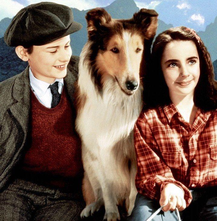 Elizabeth Taylor and Roddy McDowall starred in Lassie - family friendly dog-them...