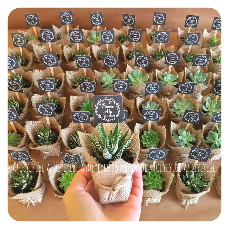Valentines Day Gifts  & Valentines Day Gifts : Mini sukulent mini succulent kaktüs cactus ...