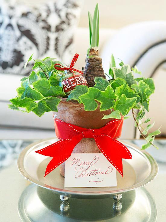 DIY Gifts : Isn't this Christmas Flower Gift, beautiful? Get more