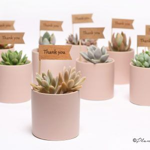 corporate gifts ideas wedding corporate gifts plant a gift