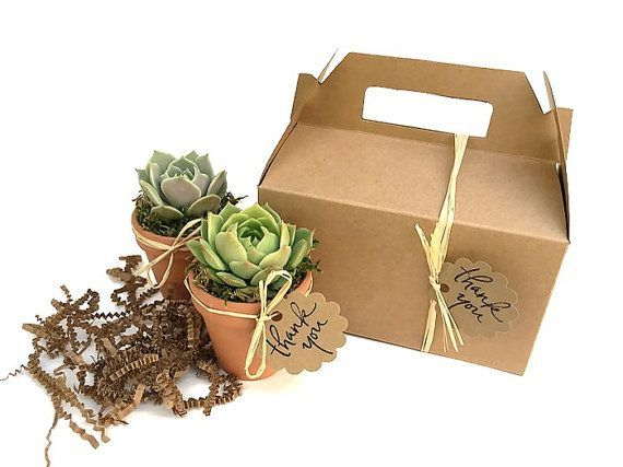 Two beautiful succulents wrapped in a Kraft gift box - great corporate gift or h...