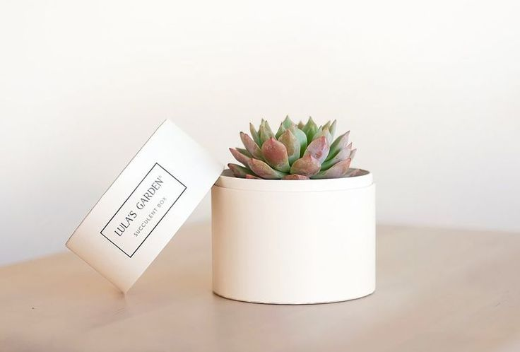 A petite succulent is great for a plant mom who doesn't have a lot of space.   #...