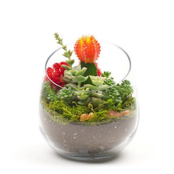 Corporate Gifts Ideas     The Sideways: DIY Succulent Terrarium Kit perfect  as ...