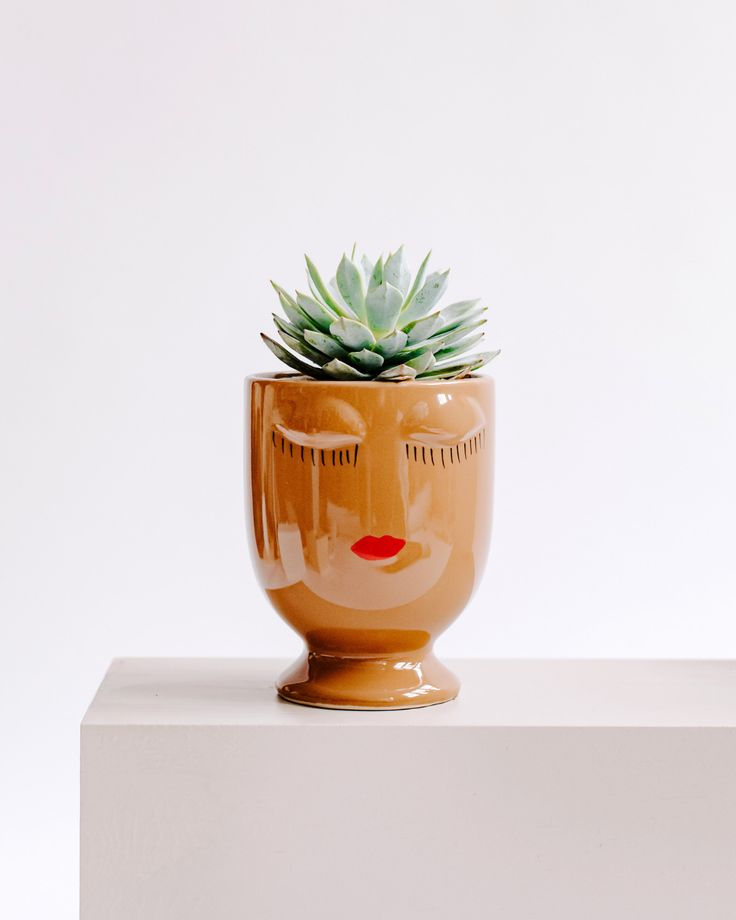 Celfie Face Succulent Gift Modern live succulent gifts. Plant gifts. Flower gift...