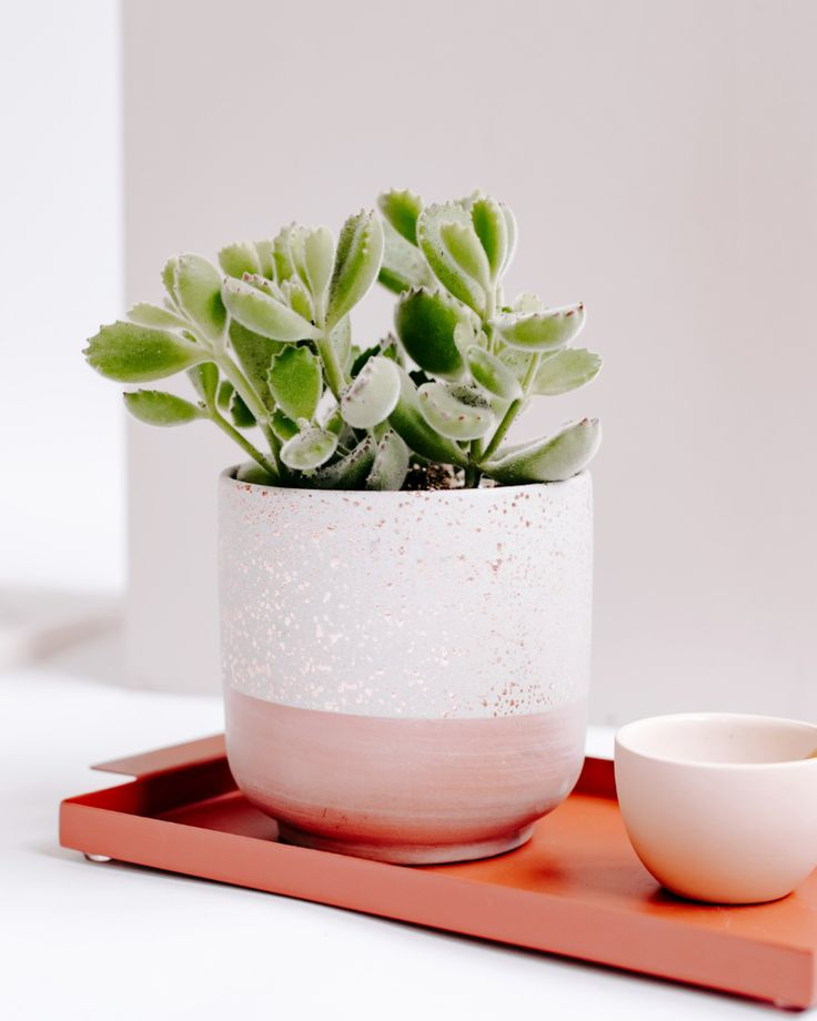 Rose Gold Succulent Gift Modern live succulent gifts. Plant gifts. Flower gifts....